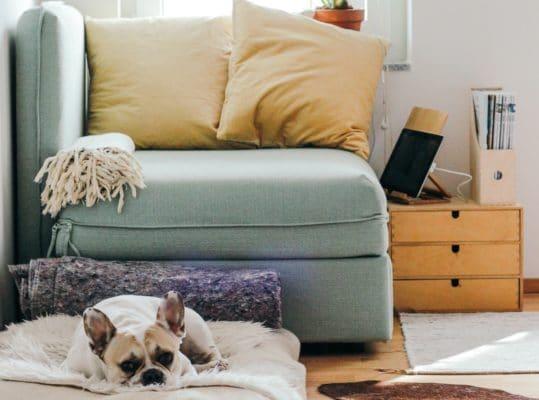 Sie sehen eine Wohnung mit einem Hund auf seinen Kissen